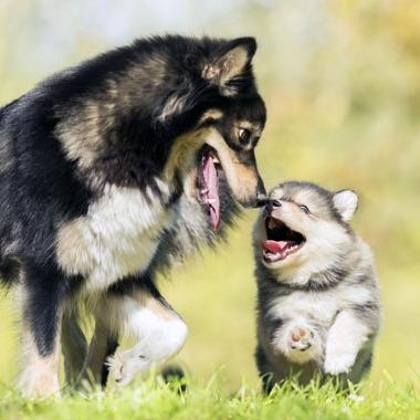 modal-cachorros